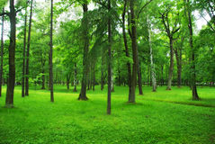 Grüner Park, Wald Stockfotografie