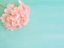 Grüner Pastellhintergrund mit einer rosa Pelargonie Stockfoto