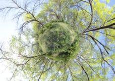Grüner Planet Stockfoto