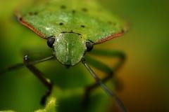 Grüner Programmfehler Stockfotos