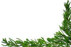 Grüner Rand Lizenzfreie Stockbilder
