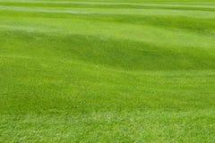 Grüner Rasen Stockbilder
