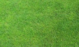 Grüner Rasen Stockfoto