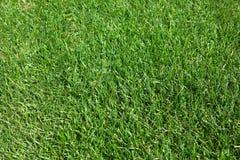 Grüner Rasen Stockbild