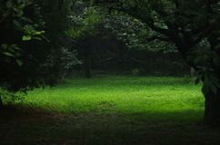 Grüner Rasen Lizenzfreie Stockfotos