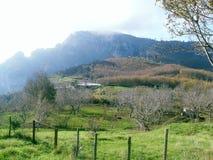Grüner Rasen auf dem Berg Faito in Italien stockfoto