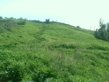 Grüner Rasen auf dem Berg Faito in Italien lizenzfreies stockbild