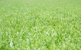 Grüner Rasen für Hintergrund Stockfotografie