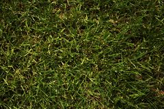 Grüner Rasen Hintergrund Naturbeschaffenheiten lizenzfreie stockfotografie
