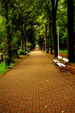 Grüner Rasen im Stadtpark Stockfoto