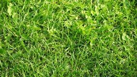 Grüner Rasen am sonnigen Tag stock video footage