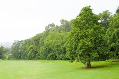 Grüner Rasen und Bäume