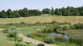 Grüner Rasen und Bäume in einem ruhigen Park stock video footage
