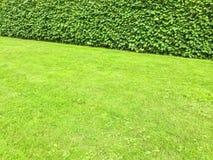 Grüner Rasen und Hecke stockbilder