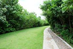 Grüner Rasen und Kiesel mit Grünpflanzen Stockfotos