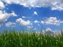 Grüner Rasen unter blauem Himmel Stockbild