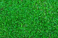 Grüner Rasenflächehintergrund Stockfoto
