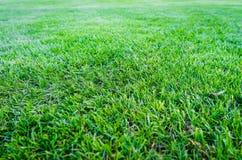 Grüner Rasenflächehintergrund, Beschaffenheit, Muster Stockbild