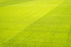 Grüner Rasenflächehintergrund, Beschaffenheit, Muster Stockfoto