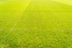 Grüner Rasenflächehintergrund, Beschaffenheit, Muster Lizenzfreie Stockfotos