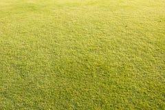 Grüner Rasenhintergrund stockbilder