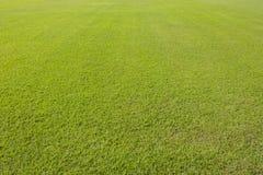 Grüner Rasenhintergrund lizenzfreie stockbilder