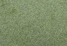 Grüner Rasenhintergrund Stockfotos