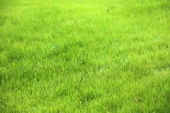 Grüner Rasenkopienraum Stockbilder