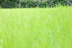 Grüner Rasenkopienraum Stockfoto