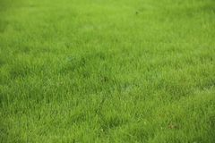 Grüner Rasenkopienraum Stockbild