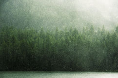Grüner Regen und grüne Kronen West-Sayan stockfoto