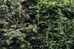 Grüner Regenwald Stockfoto