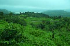 Grüner Reichtum einer Natur Stockbild