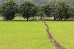 Grüner Reis-Bauernhof mit Bäumen Lizenzfreie Stockfotografie