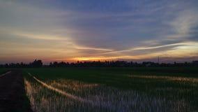 Grüner Reisfeldvordergrund im Himmelsonnenuntergang, Tag zur Nachtdämmerungs-Zeitspanne stock footage