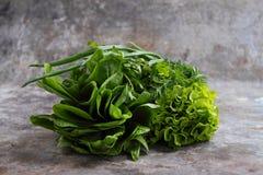 Grüner Romainekopfsalat stockfotos