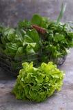 Grüner Romainekopfsalat stockfotografie