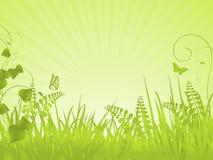 Grüner ruhiger Frühlingshintergrund Stockfoto