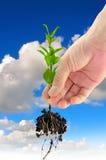 Grüner Sämling in der Hand Lizenzfreies Stockfoto