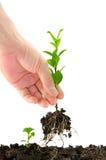 Grüner Sämling in der Hand Lizenzfreie Stockfotos