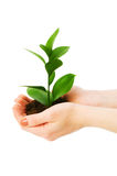 Grüner Sämling in der Hand getrennt Lizenzfreies Stockbild