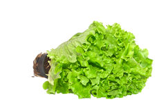 Grüner Salat. Lizenzfreies Stockbild