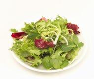 Grüner Salat Lizenzfreie Stockbilder