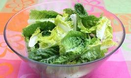 Grüner Salat Stockbilder