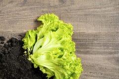 grüner Salat auf einem Holztisch Stockbild