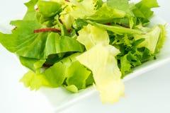 Grüner Salat auf weißem Hintergrund Stockfotos