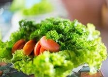 Grüner Salat mit Tomaten Lizenzfreie Stockbilder