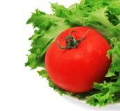 Grüner Salat und Tomate Lizenzfreie Stockbilder