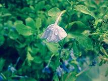 Grüner schöner Blumenmorgen des Gartens Lizenzfreie Stockbilder