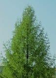 Grüner schöner Weihnachtsbaum im Sommer stockbilder